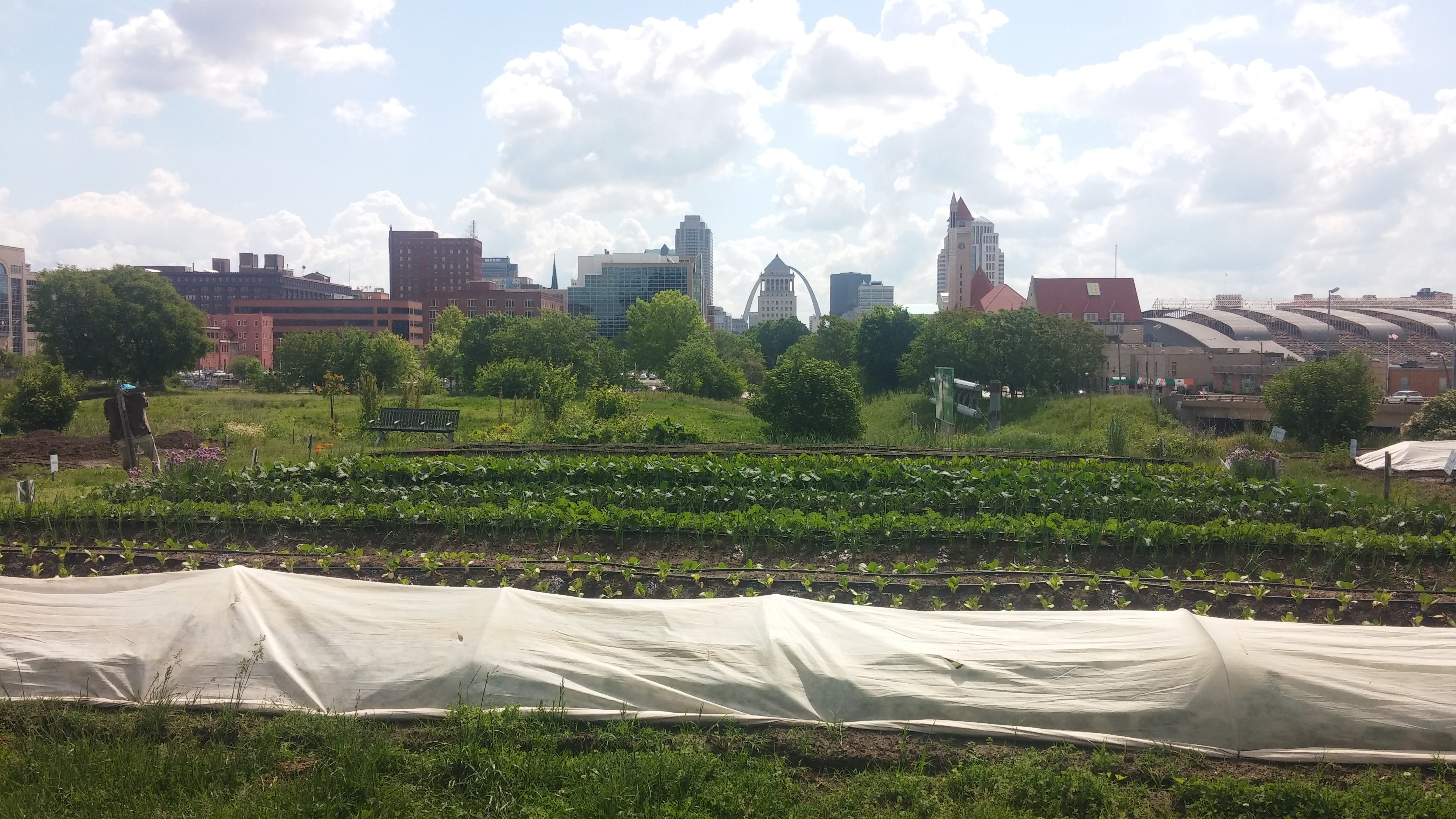 3 May 2016 (15) Gateway Greening Urban Farm