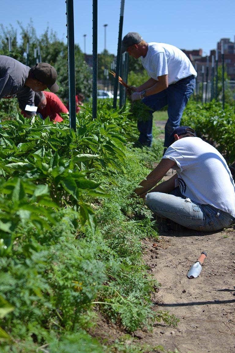 GG16 Gateway Greening Urban Farm