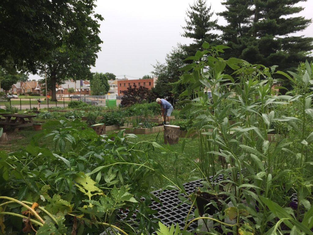 Mallinckrodt School Garden 03