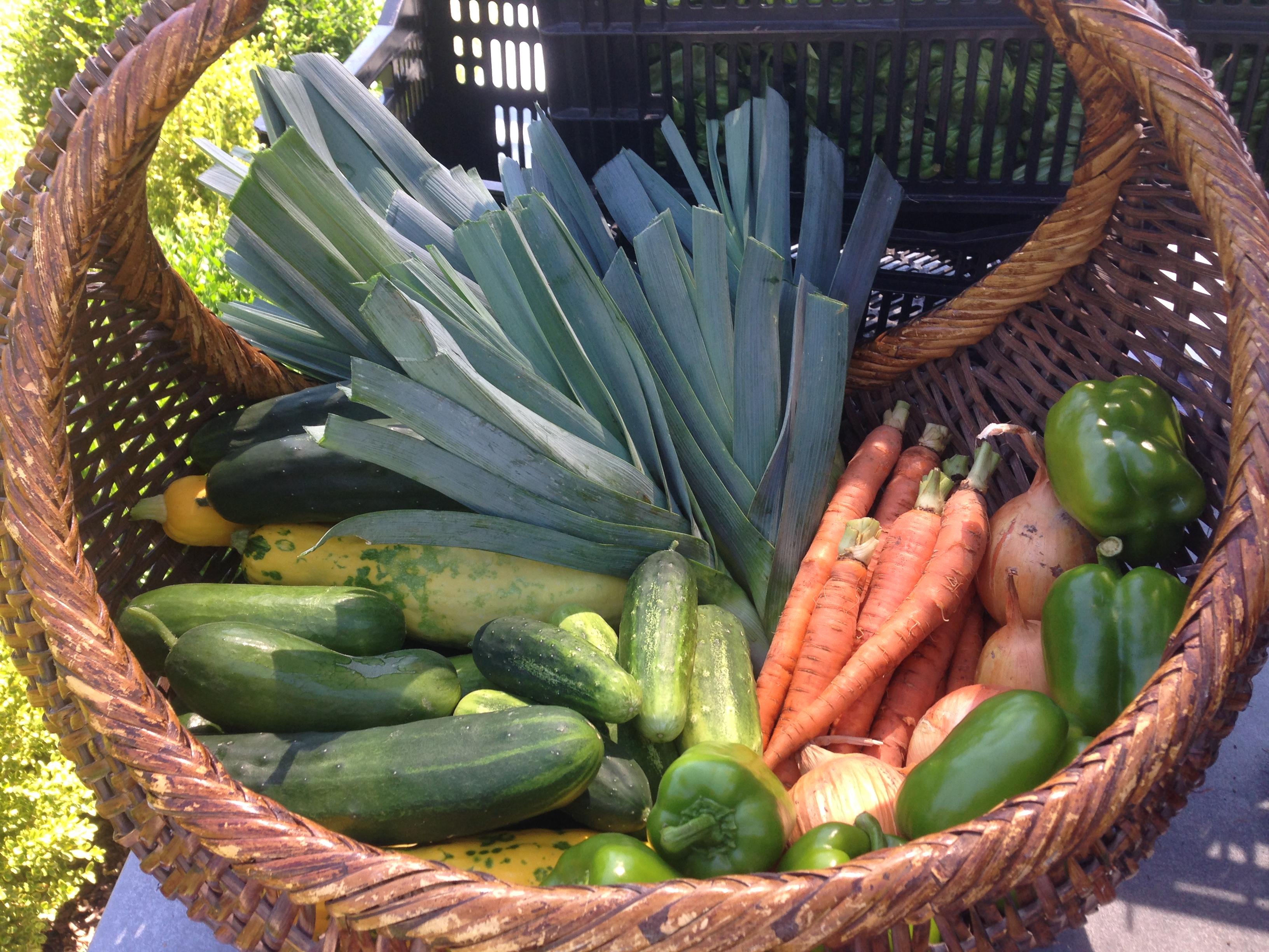 Harvest - Gateway Greening Urban Farm