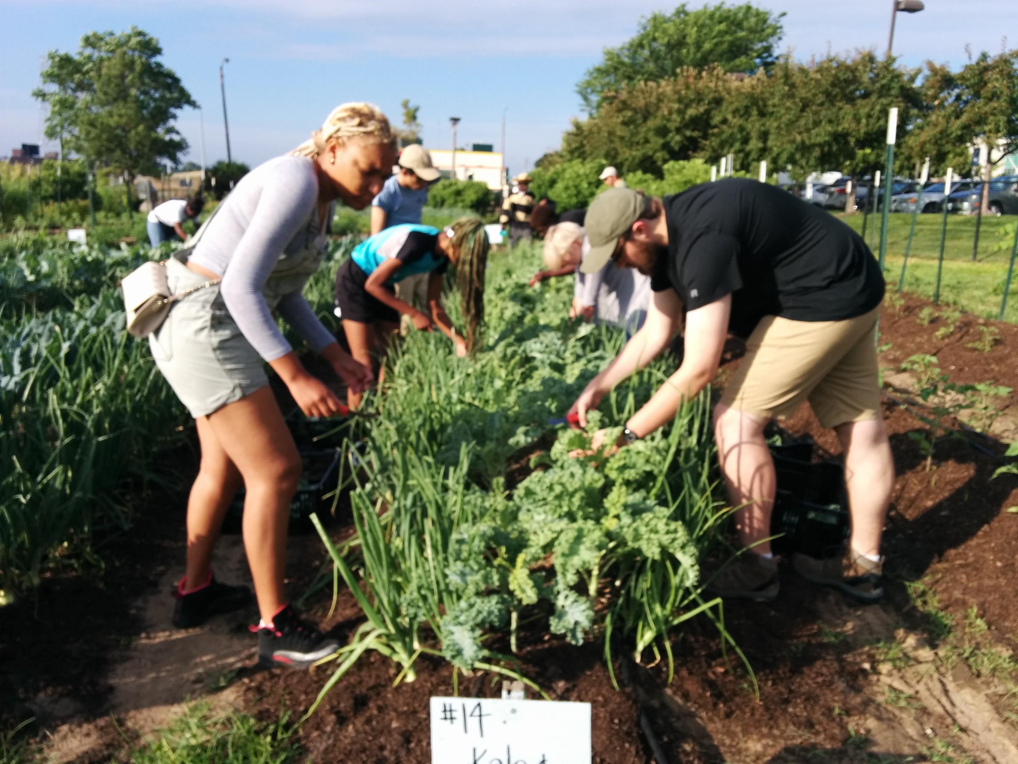 Dig It STL - Gateway Greening Urban Farm