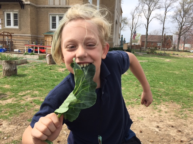 There are many reasons to not always clear out your garden beds in fall and winter. One reason is because in early spring when you take your classes out it gives students something to chew on other than knowledge and information. Who says kids don't like greens?