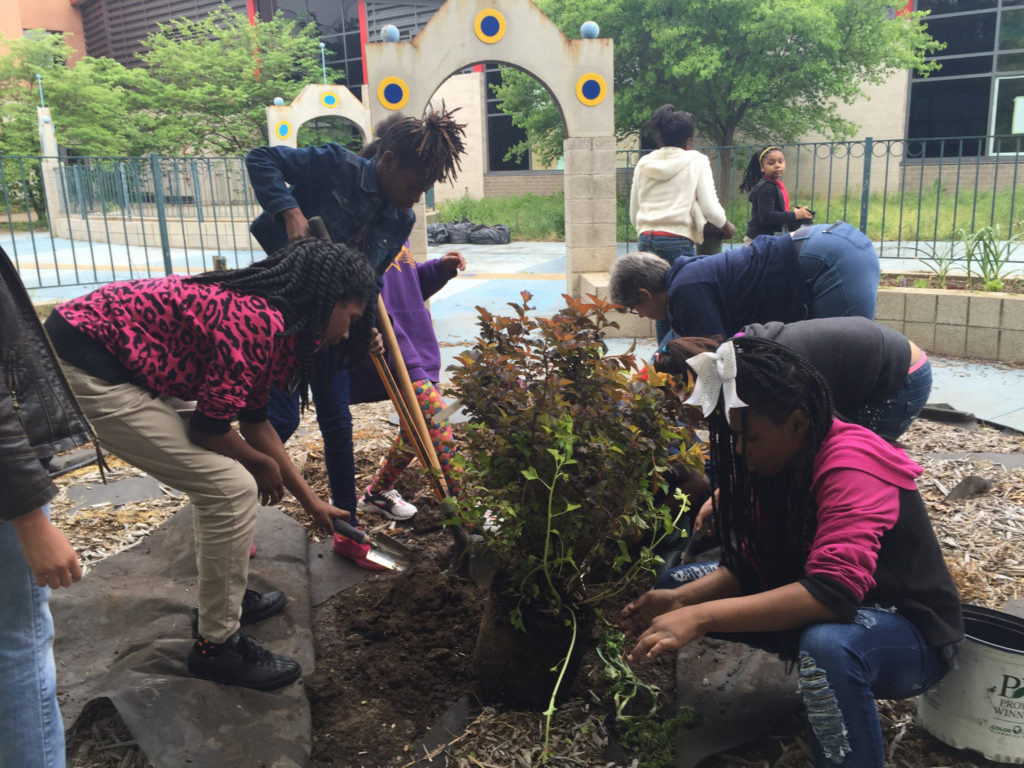 Planting ninebark they secured from Gateway Greening's Great Perennial Divide. Thank you Hannah for all the effort you put in to GPD to beautify our city.