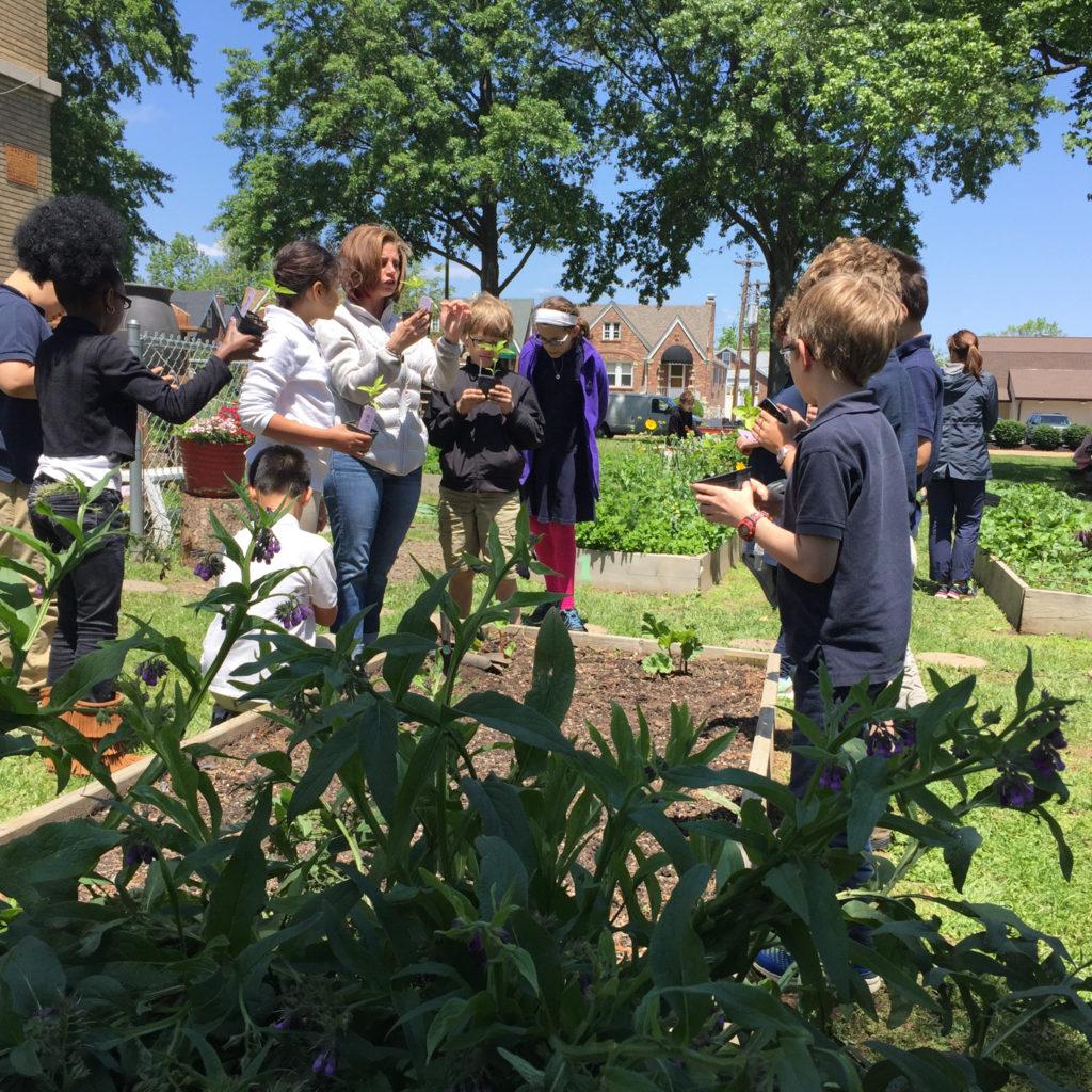 Mallinckrodt School Garden 05