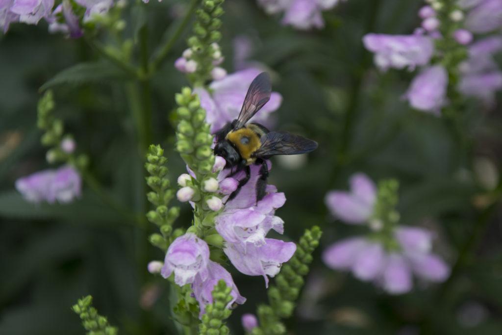 Pollinators_04