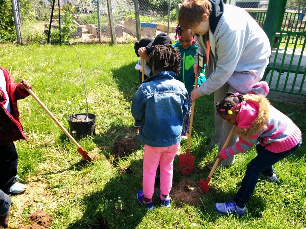 fenton planting trees