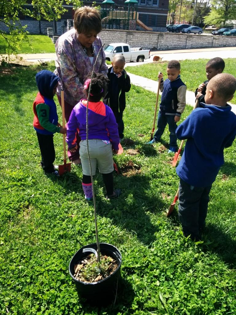 fenton planting trees3