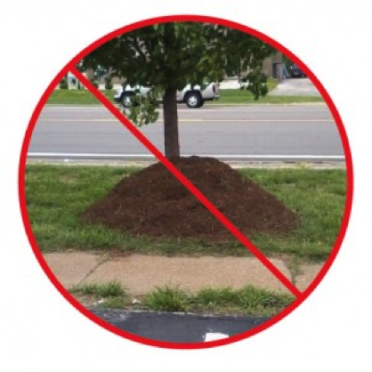 Image from Metropolitan Forestry Services, Inc. http://www.metro-forestry.com/say-no-to-volcano-mulching/
